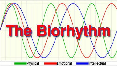 The BioRhythm